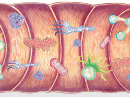 FEEDING THE MICROBIOTA: 4rd Symposium GE-VD